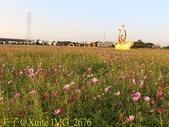 2017桃園花彩節 花現楊梅 童遊花海 楊梅活動展區 20171026:IMG_2676.jpg
