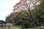 2014楓石門 野餐日 (桃園石門水庫 南苑公園) 2014/12/13:IMG_9814.jpg