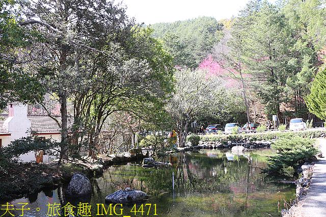 2021年 武陵農場 山櫻花、紅粉佳人 繽紛綻放 20210214:IMG_4471.jpg