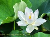 新北市石門白沙灣麟山鼻步道 2015/06/04:DSC_2708.jpg