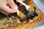 三奇蜜蜂生態農園 20190920:IMG_0254 蜂蜜.jpg