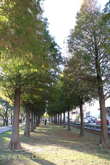 IMG_8076.jpg - 桃園市桃園區玉山公園 落羽松大道 2016/12/31
