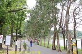 台北市內湖區碧湖公園 20210317:IMG_6470 白千層.jpg