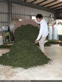 台式綠茶製作 2 - 揉捻成型 (包布球.平揉.解塊):P1100648.JPG