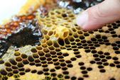 三奇蜜蜂生態農園 20190920:IMG_0259 王台.jpg