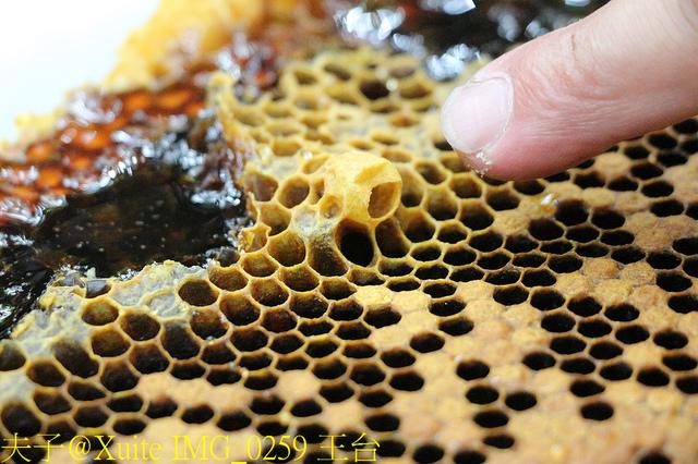 IMG_0259 王台.jpg - 三奇蜜蜂生態農園 20190920