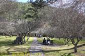 2021年 武陵農場 山櫻花、紅粉佳人 繽紛綻放 20210214:IMG_4608.jpg