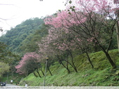 汐止彌勒山天道清修院 2011/03/14 :P1010703.JPG