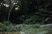 新竹峨眉獅山藤坪親水公園螢火蟲大爆發 20140503 :IMG_1944.jpg