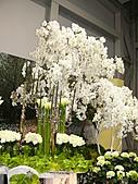 2011/04/24 花博倒數第二天, 最後的一個週日, 天氣晴, 人人山人海:P1020640.JPG