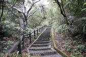 谷關捎來步道 谷關七雄老四-波津加山步道 暖身路段 20150221:IMG_3560.jpg