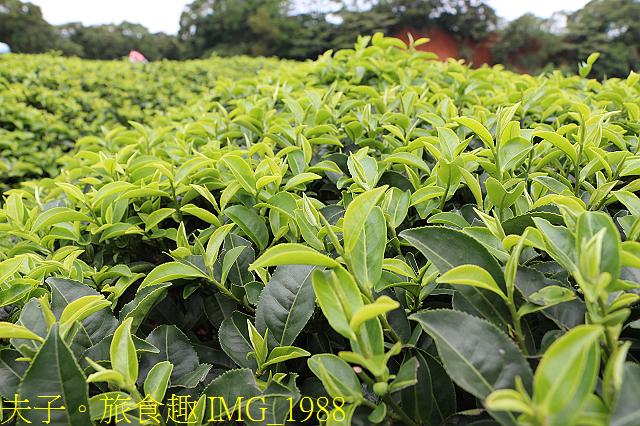 IMG_1988.jpg - 寶山拿普原生茶有機茶園 20201017