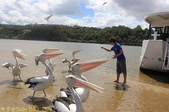 澳洲 Catch-A-Crab 黃金海岸翠德 (Tweed) 河捕蟹探險之旅 2013/02/07:IMG_7579.jpg