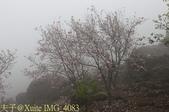淡水楓樹湖古道木蘭花辛夷 20150225 :IMG_4083.jpg
