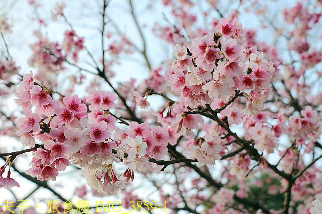 IMG_3859-1.jpg - 內湖大溝溪生態園區 春節走春看花海 20210131