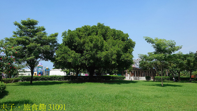 31091.jpg - 高雄梓官梓平公園砲彈樹 20210924
