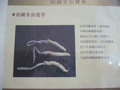 冬蟲夏草之偶見 2011/10/10 於台北三峽遠雄社區:P1090251.JPG