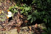 新北市汐止大尖山風景區 - 茄苳瀑布 2014/07/14:IMG_1930 端紅蝶.jpg