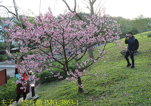 IMG_3863-1.jpg - 內湖大溝溪生態園區 春節走春看花海 20210131