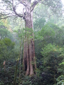 桃園上巴陵拉拉山 (達觀山) 2009/11/26 :P1050577.JPG