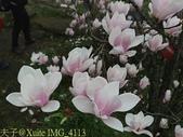 淡水楓樹湖古道木蘭花辛夷 20150225 :IMG_4113.jpg