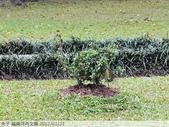 越南河內文廟 2012/01/21:P1040658.jpg