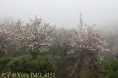 淡水楓樹湖古道木蘭花辛夷 20150225 :IMG_4151.jpg