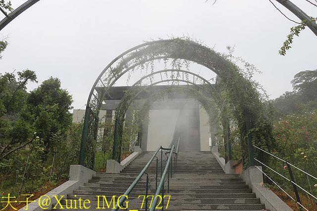 IMG_7727.jpg - 苗栗縣頭屋鄉 雅聞七里香玫瑰森林 20170822