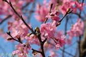 新北市三芝群櫻紛飛漫步行 - 三生步道 20140228 :IMG_8797.jpg