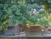 唯一完整保存下來的日本神社-桃園忠烈祠 2009/09/26:P1040527.JPG