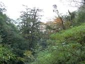 桃園上巴陵拉拉山 (達觀山) 2009/11/26 :P1050532.JPG