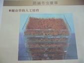 冬蟲夏草之偶見 2011/10/10 於台北三峽遠雄社區:P1090254.JPG