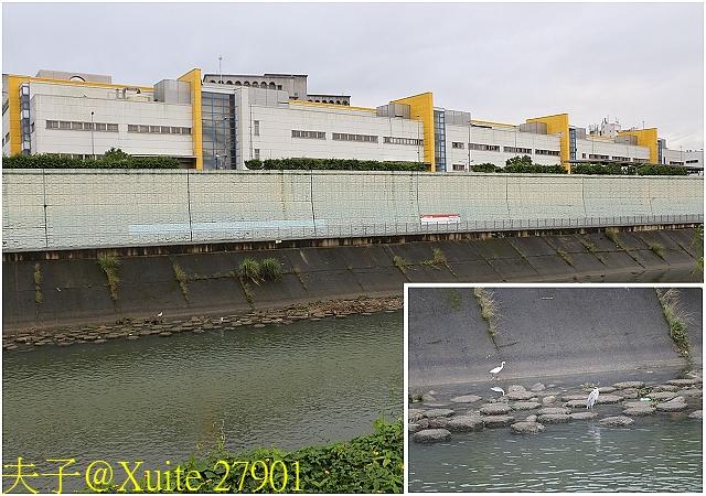 台北市景美河濱公園 塗鴉牆 (Graffiti Walls) 2017119:27901.jpg