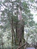 桃園上巴陵拉拉山 (達觀山) 2009/11/26 :P1050569.JPG