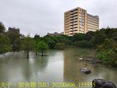 台灣大學生態池 複刻瑠公圳水源地 20200406:IMG_20200406_155555.jpg
