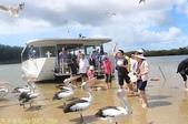 澳洲 Catch-A-Crab 黃金海岸翠德 (Tweed) 河捕蟹探險之旅 2013/02/07:IMG_7586.jpg