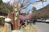 武陵農場 紅粉佳人 櫻花 2017/02/10:IMG_0011.jpg
