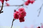 台中市秋紅谷廣場 (秋紅谷生態公園) 2015/03/15:IMG_5016.jpg