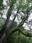 桃園上巴陵拉拉山 (達觀山) 2009/11/26 :P1050552.JPG