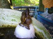 有機菜園的意外看見青蛙交配 (青蛙下蛋) 3P 喔!:P1070158.JPG