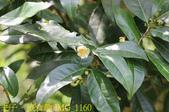 寶山拿普原生茶有機茶園  20201017:IMG_1160.jpg