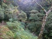 桃園上巴陵拉拉山 (達觀山) 2009/11/26 :P1050533.JPG
