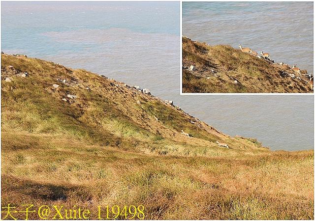 119498.jpg - 可愛的梅花鹿在大坵島等你 20171021