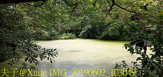 台北市 木柵公園 萃湖 20190602:IMG_20190602_103049.jpg