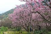 騰龍御櫻 櫻花綻放 2018/03/05:IMG_8844.jpg