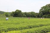 寶山拿普原生茶有機茶園  20201017:IMG_1986.jpg