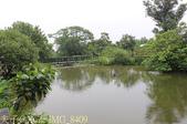 桃園市八德埤塘自然生態公園 20150501:IMG_8409.jpg