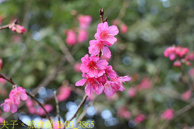 IMG_3865.jpg - 內湖大溝溪生態園區 春節走春看花海 20210131