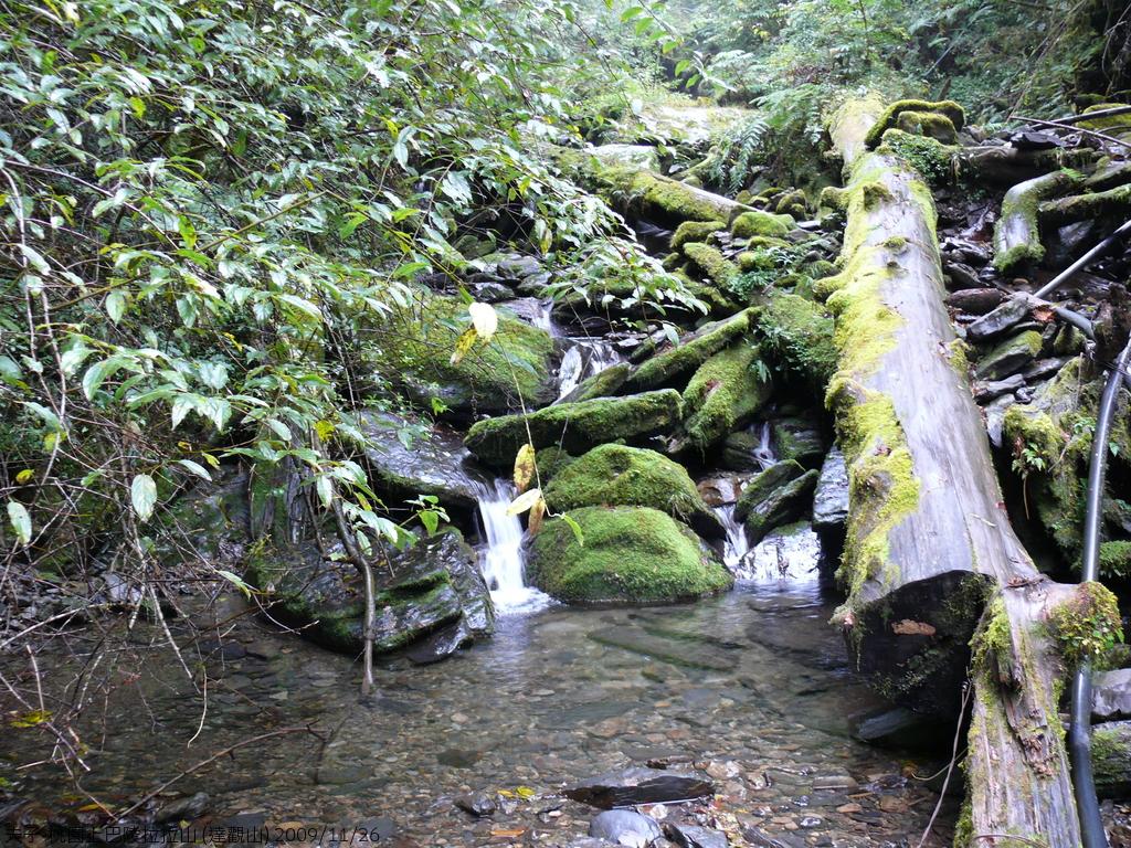 桃園上巴陵拉拉山 (達觀山) 2009/11/26 :P1050578.JPG