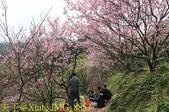 騰龍御櫻 櫻花綻放 2018/03/05:IMG_8857.jpg